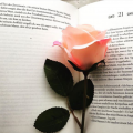 Lovely-bookish