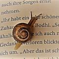 Leseschneckchen555