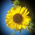 Sunshine81
