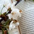 noane_lovesbooks