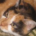Katzenmicha