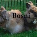 Bosni
