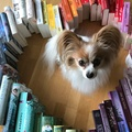 Lauras-bookshelf
