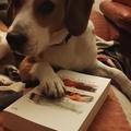 LostIinBooks