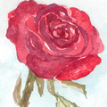 Dark_Rose